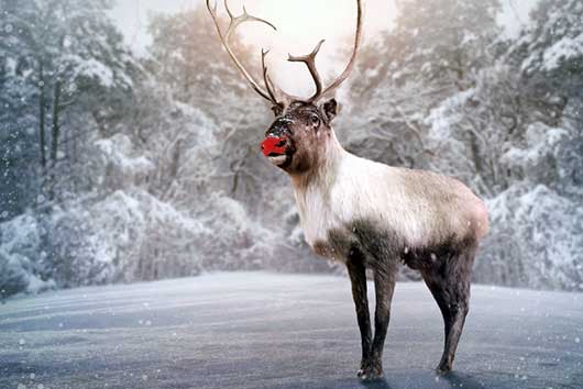 5-Life-Lessons-from-Rudolph-the-Red-Nosed-Reindeer-MainPhoto